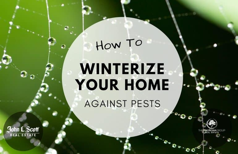 How to winterize your home against pests in the puget sound area